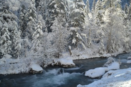 Snow covered forest and stream.