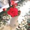 Bright red geranium in beatiful vase.