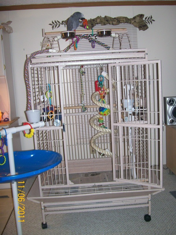 Zaz on top of his big white cage.