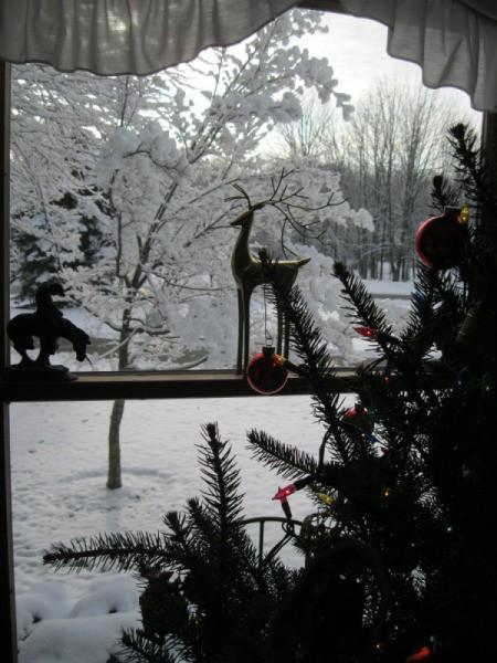 Yard winterscape through the window.