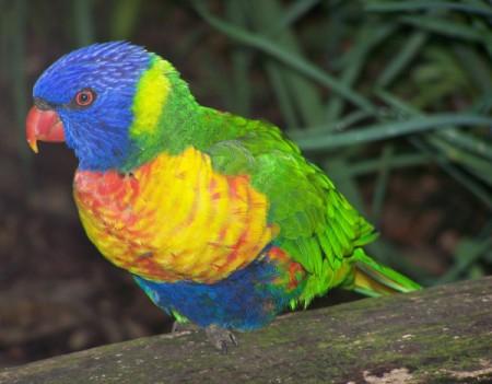 A lorikeet at the Montecasino Bird Gardens, South Africa.