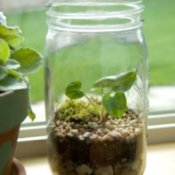 Making a Terrarium, Small Terrarium in Mason Jar