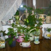 Recycled ceramic planters from coffee cups and other dishes.