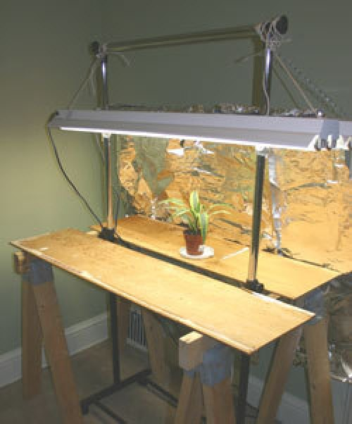 """Using Grow Lights"""" Regular old """"non-fanfare"""" fluorescent tube lighting is the easiest and most common type of artificial lighting for growing plants and starting seeds"""