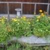 Flower Box full of blooms