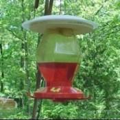 Hummingbird Feeder Rain Protector 2
