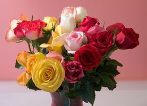 Selecting Valentine's Day Flowers, A bouquet of fresh cut roses for Valentine's Day