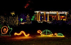 Holiday light display at Shore Acres.