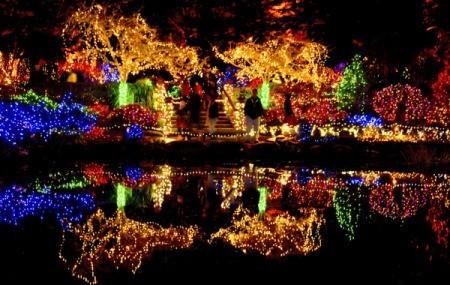 Holiday Light Photos | ThriftyFun