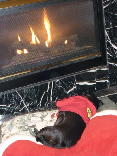 A pug with a red sweater lying in front of fire.