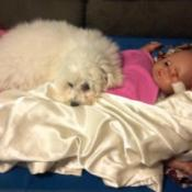 Sophia, a white Bichon Frise, lying on a cot with a baby doll.