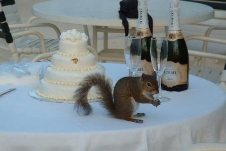 Wildlife: Squirrel At Wedding on cake table.