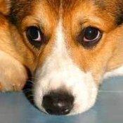 Lonley Dog