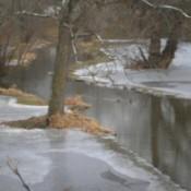 Winter Splendor in the Park