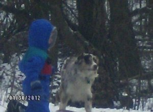 Sadie (Dog) playing in the snow with a boy