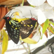 Butterfly Sanctuary (Hinsdale, MA)
