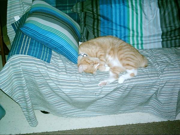 Chance sleeping