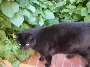 Cecilia (Cat)