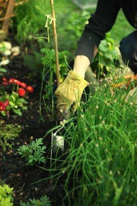 Hands digging in garden with hand tools