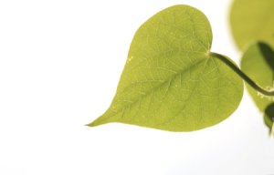 Green Valentine's Day Ideas, heart shaped leaf