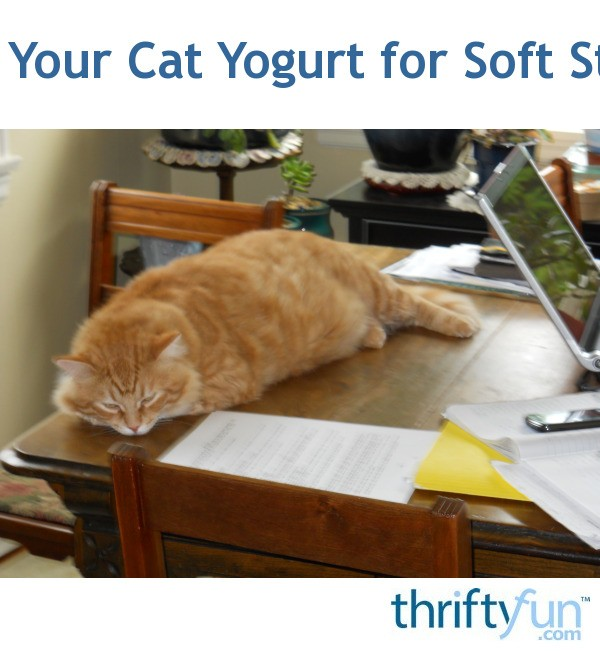 Give Your Cat Yogurt for Soft Stools ThriftyFun