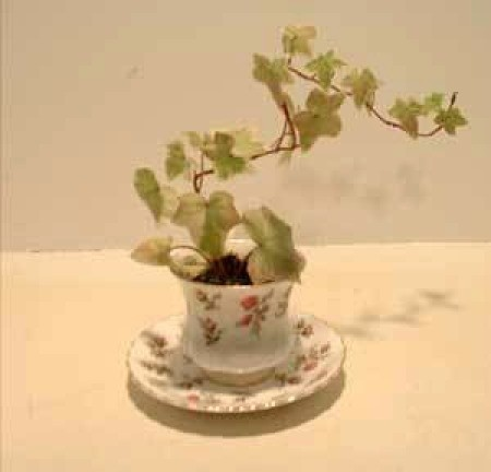 An ivy plant in a china teacup with saucer.
