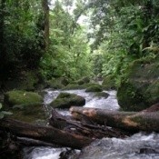 Dominica Stream