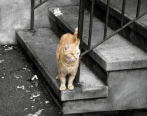 A cat that looks like it has been left behind after a disaster.