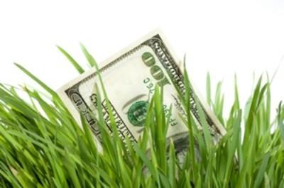 A hundred dollar bill between grass blades.