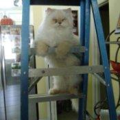 Bentley on ladder.
