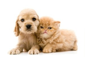 Puppy and kitten.