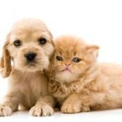 Puppy and kitten.
