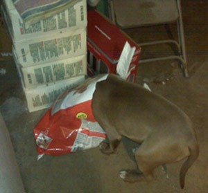 A pet being fed too much, and eating right out of the bag.