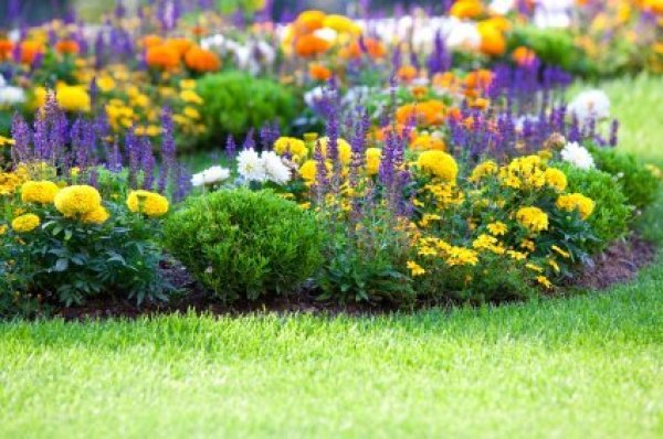multicolored flowerbed on a lawn - Flower Beds