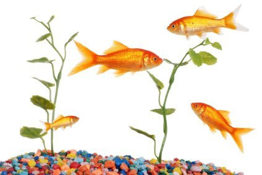 Saving Money on Aquarium Supplies   ThriftyFun