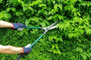 Pruning a Hedge