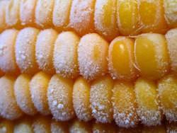 frozen corn
