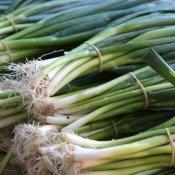 Freezing Green Onions