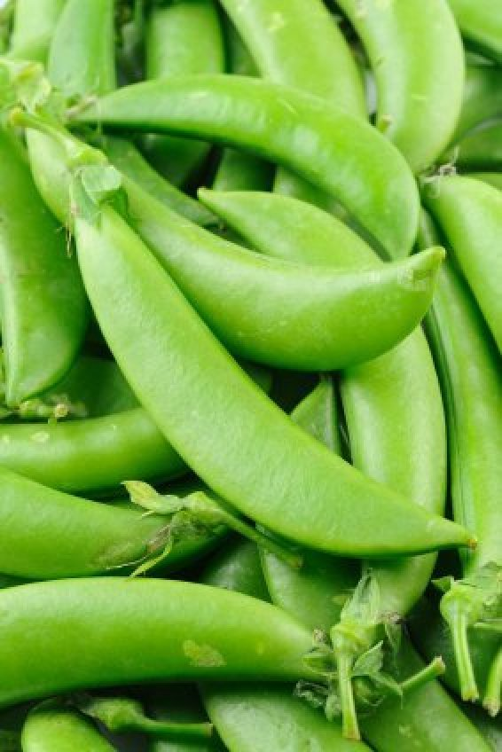 Freezing is a good way to preserve the overflow of your garden pea crop. This is a guide about freezing snow peas (sugar, Chinese, or sugar snap peas ).