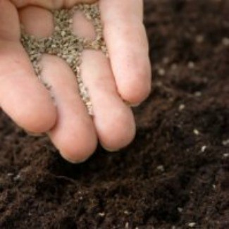 Sowing seeds directly.