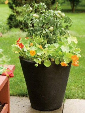 Large planter with flowers.