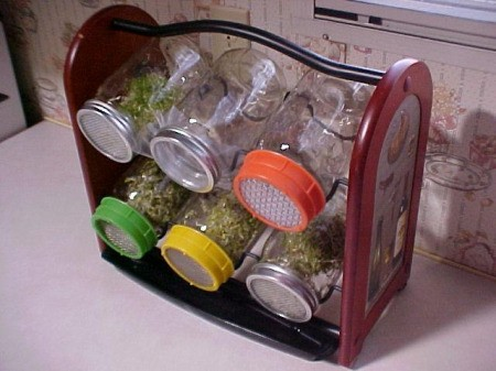 Growing Sprouts In A Jar - Sprout Garden