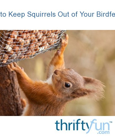 Best 28 How To Keep Squirrels Out Of Your Bird Feeder How To Keep Squirrels Out Of Flower