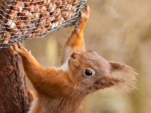 Squirrel on a bird feeder.