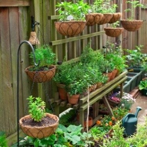Container garden.