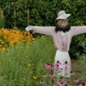 Building a scarecrow.