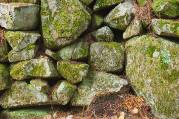 Growing Moss On Rocks