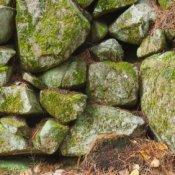 Moss on a rock wall.