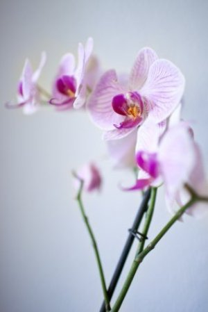 Keeping orchids upright