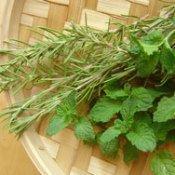 Fresh culinary herbs.